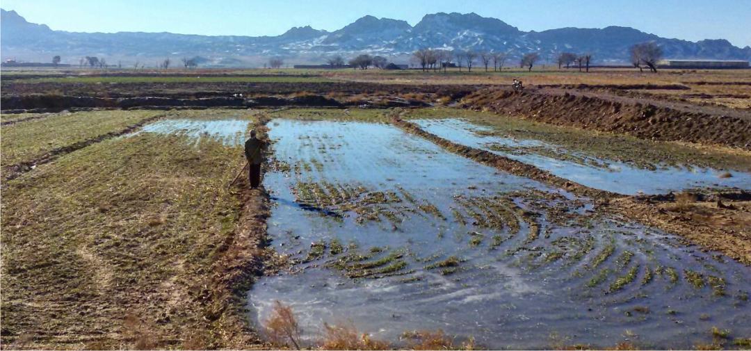 Flooding Saffron fields Saffron Expert