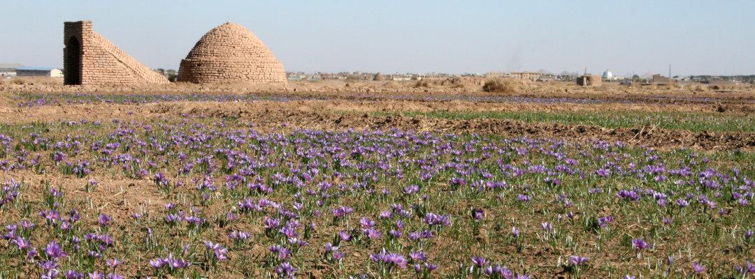 Saffron - How did the name of saffron develop?