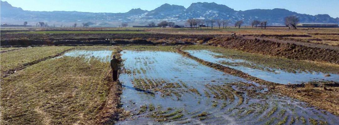 Die Safranfelder durch die Safranbauer, die ständig Ihre Felder beobachten, bewässert.